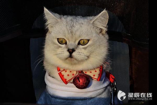 """(猫咪很可爱,养猫要注意卫生哦。资料图。图片由星辰影像拍客 斌戈戈 摄) 星辰在线9月14日讯(通讯员 汤雪)抱猫、亲猫、与猫同睡…30岁的刘先生一家""""爱猫如命"""",每天都要与猫""""亲密接触"""",结果一家三口的皮肤都生出了硬币大小的""""圆斑"""",这""""圆斑""""越抓越痒,越长越多。"""